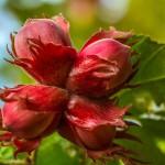 walnut-851527_960_720