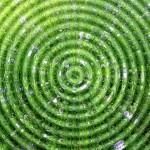 green-circles-834309_960_720